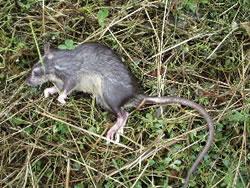 Dead Animal Odors