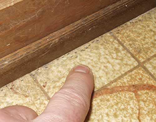 Small House Ants Image Search Results